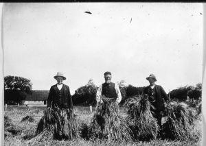 Høstarbejdere på landet