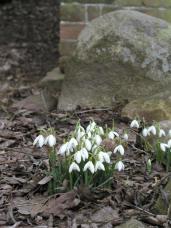 Selvom døden følger os i disse dage, kommer snart de små tegn på våren