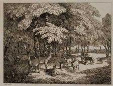 En flok hjorte i skovbrynet. Stik fra 1700-tallet